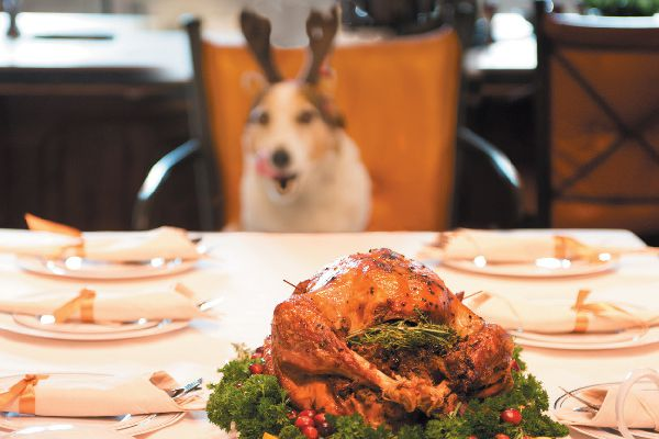 A hungry dog eyeing a holiday table.