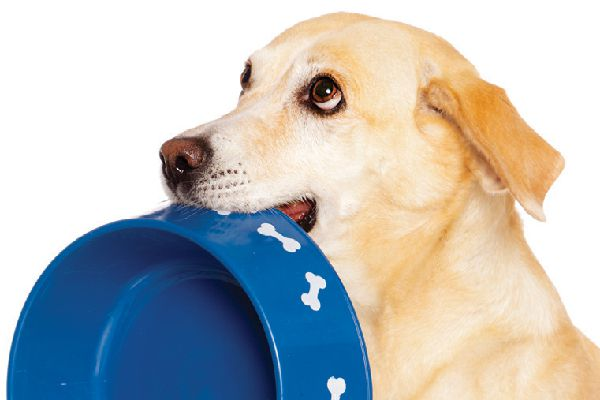 A dog begging with an empty bowl.