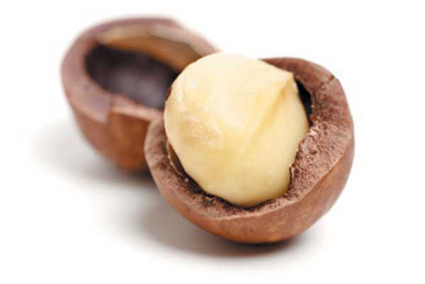 Macadamia nuts are toxic to dogs and can cause severe symptoms if ingested: low-grade fever, vomiting and neurologic issues. Never feed macadamia nuts to a dog. Photography ©adogslifephoto   Getty Images.