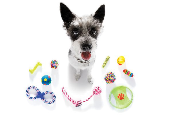 A dog surrounded by dog toys.