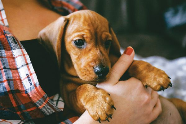 A woman in flannel, holding a puppy.