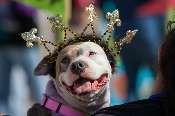 The Krewe of Barkus and Meoux holds its annual Pet Parade Sunday, February 24. Thousands of costumed pets and their owners gather to compete in costume contests and walk in a giant pet parade.