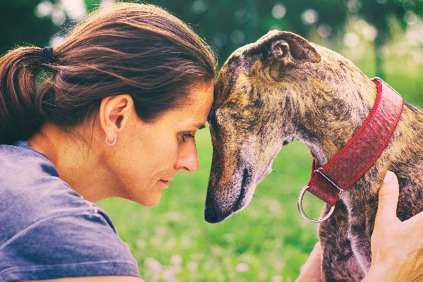 A woman touching heads with a dog, sad and serious.
