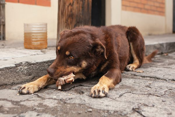 One of Bolivia's street dogs.