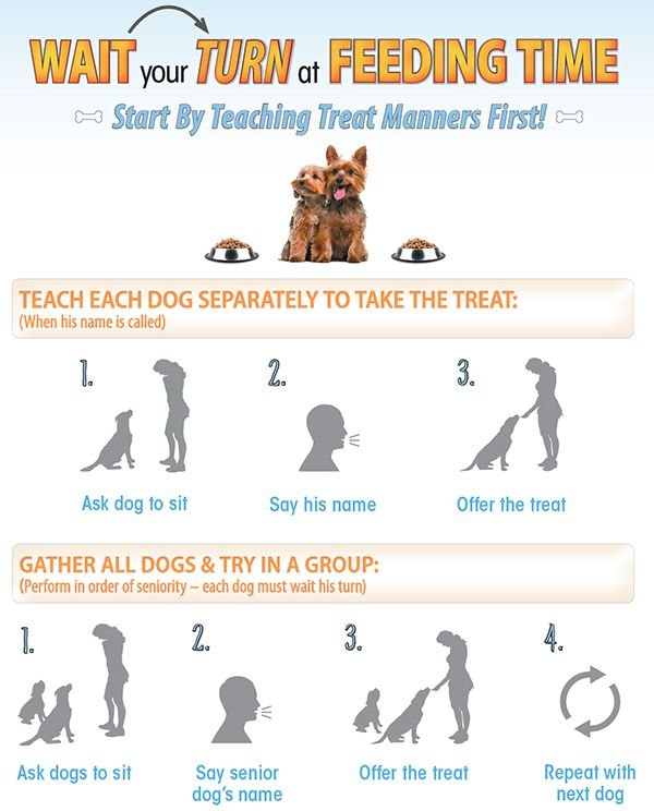 How to feed dogs in multi-dog households.