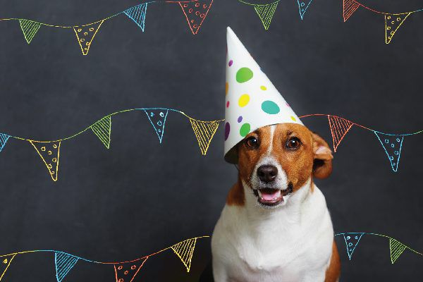 Small dog with a birthday party hat on.