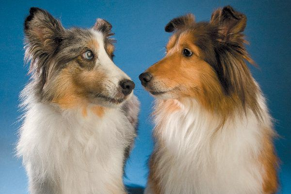 Two dogs looking at each other, confused.