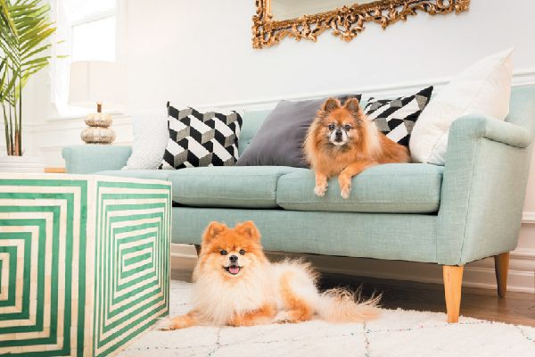 Two dogs sitting on couch and floor.