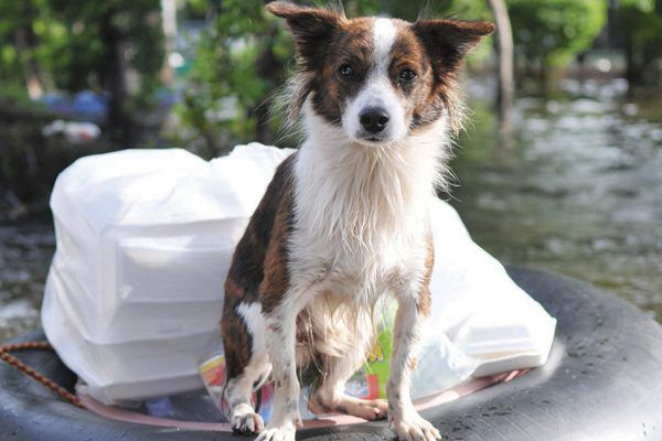 Dogs and Natural Disasters
