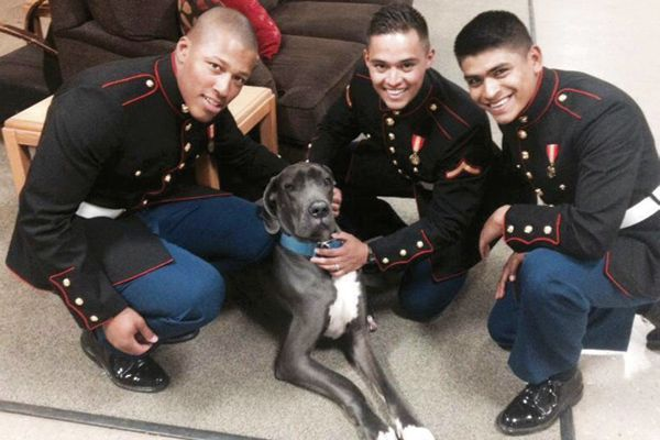 Therapy Dog and servicemen