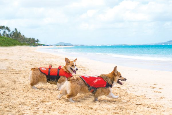 $24.99 — $59.99. Dawson Swim Life Jacket and Granby Ripstop Life Jacket; outwardhound.com