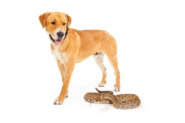 A dog looking over at a snake.