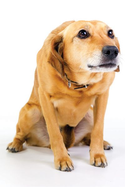 Look for specific signs and body language in your dog. Photography by: ©dageldog   Getty Images