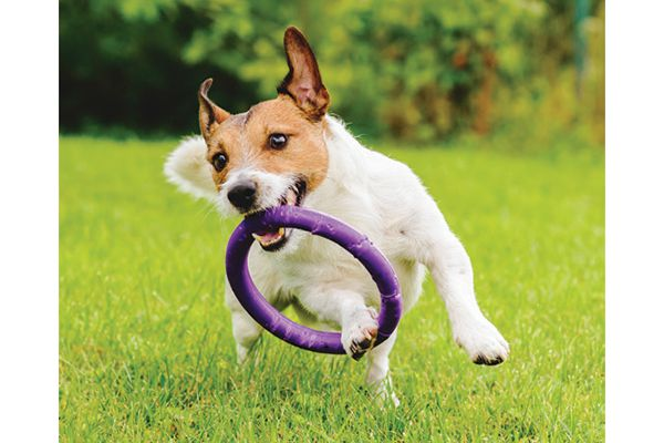 Keeping your dog active is one of the best ways to keep him healthy.  Photography by: ©alexei_tm   Getty Images