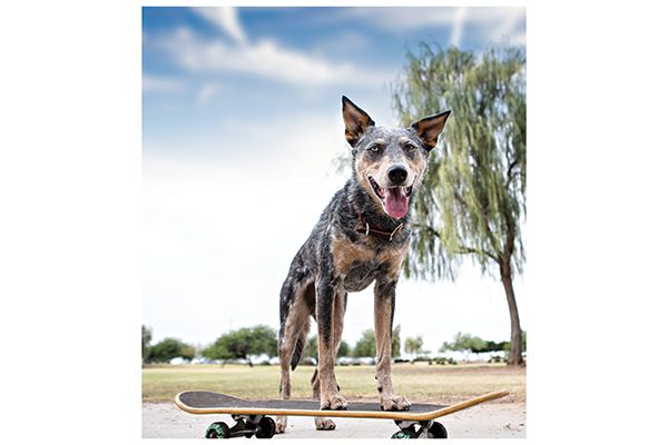 Keeping your dog active can help prevent and alleviate symptoms. Photography by: ©Victoria Rak | Tuff Photo