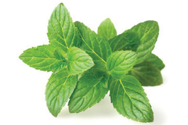 Peppermint is great for soothing your dogs upset stomach! Photography by: ©All Produce | Getty Images