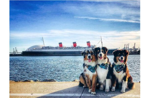 The Queen Mary invites all of Southern California to Long Beach to play, pamper and pose at the all-new Doggie Paradise for an afternoon of four-legged fun.