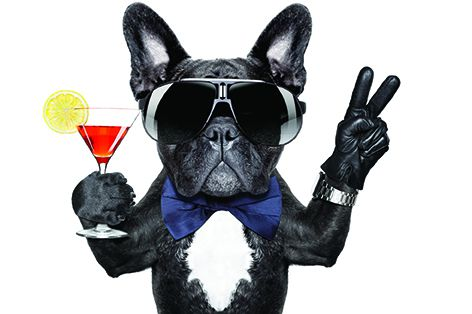 Enjoy an eventing of cocktails in a private hangar operated by Signature Flight Support at the Scottsdale Airport, Scottsdale, AZ, for this annual fundraising event for senior dogs. Contact foreverlovedpets.org