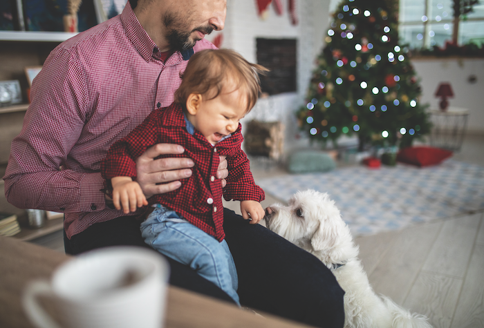 solutions to dog behavior problems during the holidays