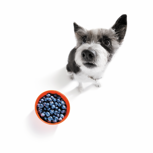 people foods good for dogs