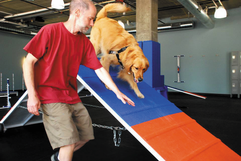 gyms for dogs