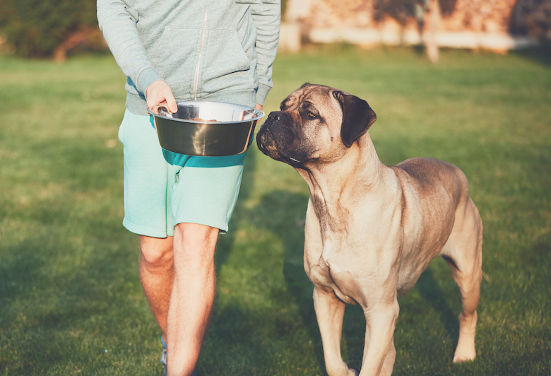 Healthy Feeding Tips for your dog