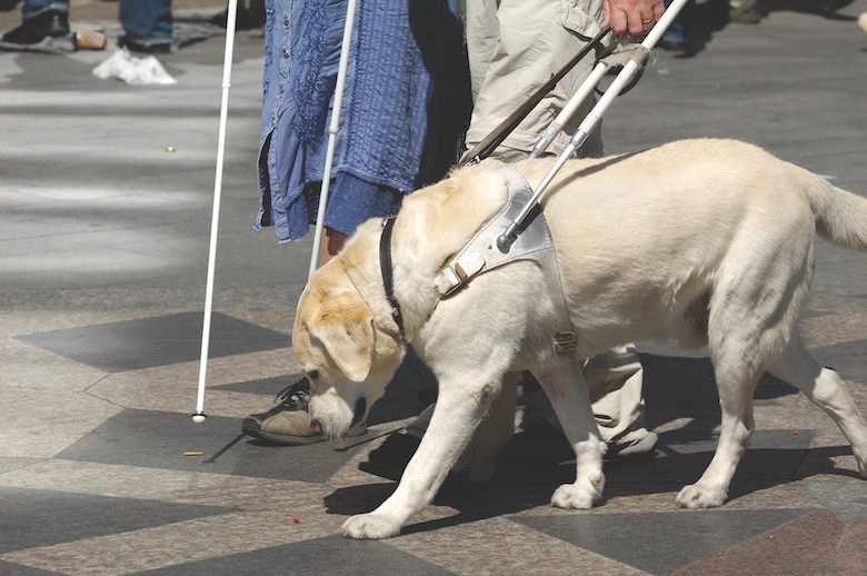 How to Raise a Guide Dog
