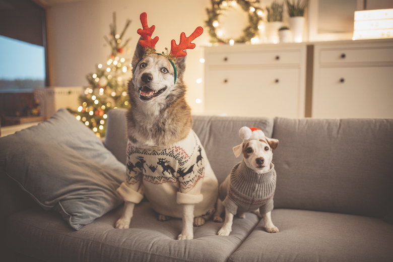Christmas with your dog