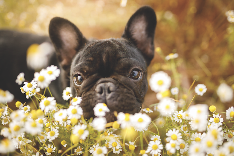 dog food for anxiety