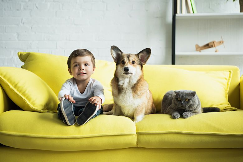 dogs and toddlers