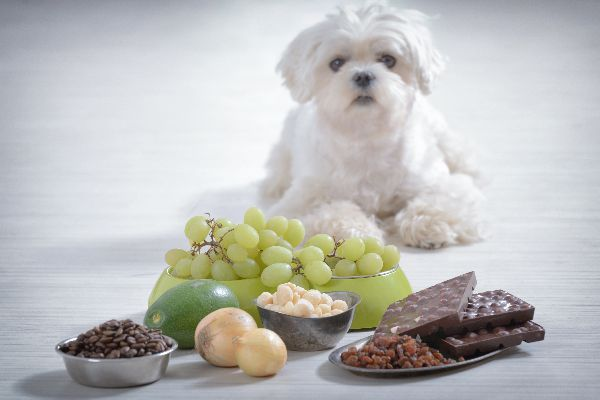Dogs with grapes, chocolates, onions and other toxic foods.