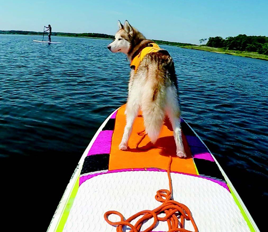 Want to Try a Dog Adventure on the Water? Try SUP